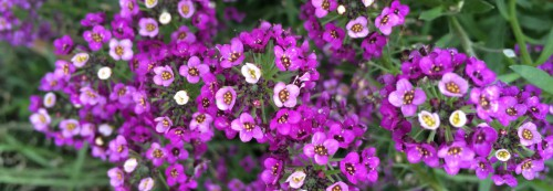 cropped-purple-flowers-01.jpg